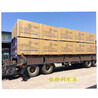 盘锦建筑模板木材市场库存充足闪电发货