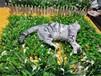 福州宠物殡葬电话,宠物善后