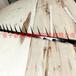 海潤公司生產pvc噴塑小號刺釘草坪園林鍍鋅圍墻防爬刺廠家
