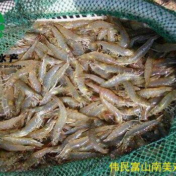 偉民年農業成蝦養殖技術
