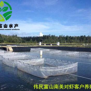 偉民農業南美對蝦養殖管理