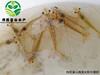 偉民農業南美對蝦蝦池滅菌