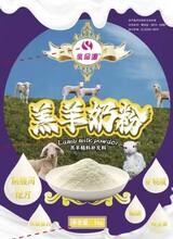 预防防治羊口疮用羔羊奶粉提高免疫图片