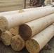 銅仁芬蘭木價格