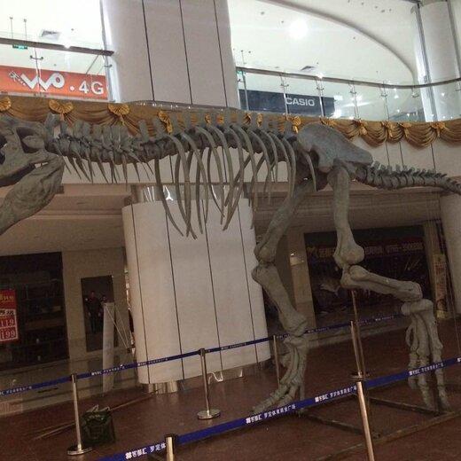 成都搭建恐龙展施工,恐龙展览租赁