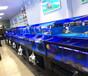 定做四層海鮮池缸_廣州大型海鮮池設計工程定制