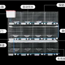 廠家新型鴿籠批發鴿子籠怎么賣鴿籠子價格圖片