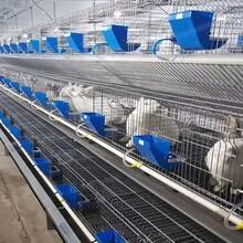階梯式兔籠廠家價格實惠雙層育成兔籠圖片