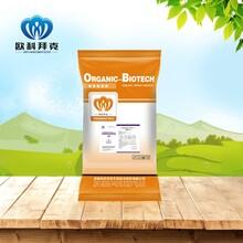 混合型飼料添加劑枯草芽孢桿菌OKH0403霉益解水溶型霉菌毒素方案產品