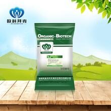 混合型飼料添加劑糞腸球菌OKH0516乳酸菌發酵飼用植物飼料