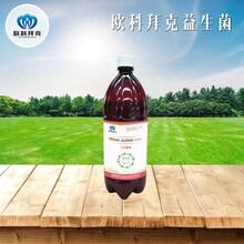 飼料添加劑液態糞腸球菌養殖動物圈舍除臭型EM菌液