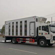 国六重汽豪沃G5X猪苗运输车畜禽运输车图片