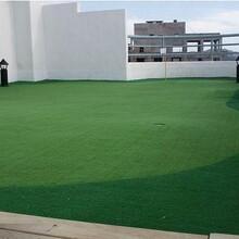 大同人造草坪施工團隊圖片