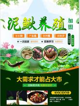 泥鰍養殖技術的養殖管理及放養準備-漁添下10號圖片