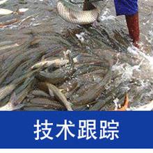 水产养殖鲈鱼鲢鱼泥鳅苗图片