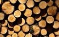 木材防霉方案#