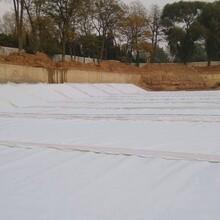 湖南600克復合土工膜防滲土工布價格?圖片