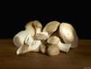 如何使用益生菌提高食用菌發菇率