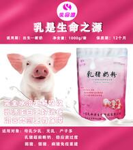 仔豬腹瀉使用乳豬奶粉預防圖片
