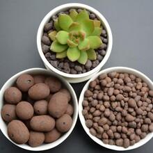 銷售1-30MM青島建筑陶粒、青島回填陶粒、青島黏土陶粒圖片