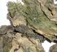 昆布提取物海帶提取物海藻提取物昆布濃縮粉