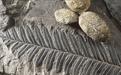 化石免費鑒定出手