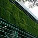東莞立體綠化工程