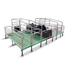 豬用產床分娩欄鍍鋅母豬產床復合板雙體欄五豐畜牧圖片