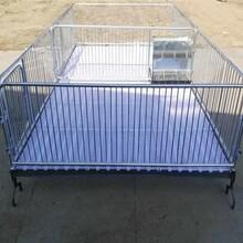 双体仔猪保育两用一体产床仔猪保育床欢迎致电洽谈图片