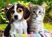 寵物為什么要換糧,你知道換糧期間需要注意什么嗎