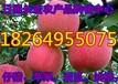 湖南紅富士蘋果價格湖南蘋果批發基地株洲蘋果價格婁底蘋果價格永州蘋果產地行情