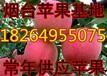 黑龍江蘋果批發價格大慶紅富士蘋果基地牡丹江蘋果價格哈爾濱蘋果價格