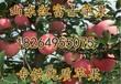 寧夏紅富士蘋果價格寧夏蘋果批發基地山東蘋果產地批發日照蘋果價格行情