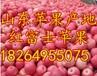 山西红富士苹果价格山西苹果批发基地忻州苹果价格?#20998;?#33529;果价格吕梁苹果价格
