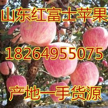 陕西苹果批发价格陕西红富士苹果价格山东苹果价格