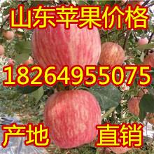 煙臺紅富士蘋果基地棲霞蘋果批發價格陜西紅富士蘋果價格甘肅蘋果價格圖片