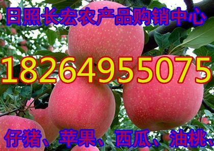 沂水縣眀梅果蔬購銷中心