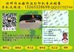 操作證打印機焊工證登高證制冷證打印機CS220E價格