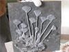 哪家公司高价购买海百合化石
