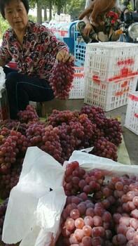 陜西紅提葡萄價格,紅提葡萄批發
