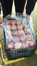陕西渭南膜袋红富士苹果批发价格图片