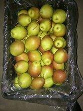 陕西红香酥梨产地行情,红香酥梨价格走势图片