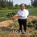 云浮市獼猴桃樹苗圖片種植示范基地