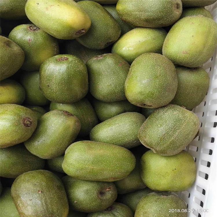 紅心獼猴桃苗批發豐產量產