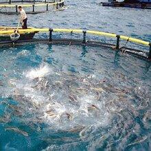 水產養殖智能化監控系統—我們最專業圖片