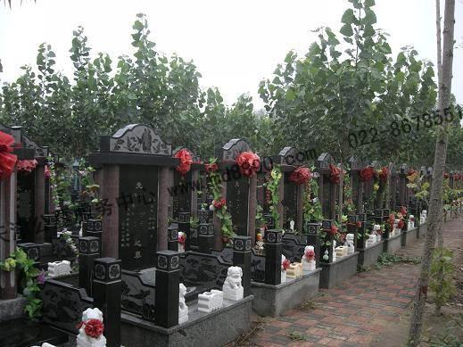 天津植树葬图片