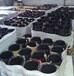 晨陽化工供應前處理除油劑,除銹劑,磷化液,鈍化劑