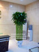绿植租摆价格|花卉租赁方案|租花咨询|花木出租