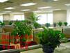 你身邊的花卉管家--鄭州心連心花卉
