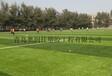 无需冲砂人造草坪-进口足球场草坪厂家代理